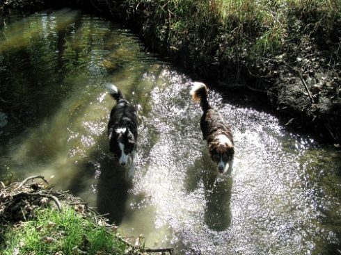 dogs in the river sized